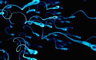Марихуана влияет на концентрацию спермы