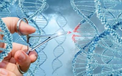 Британцы выступают за редактирование генома