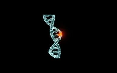 Генетическая мутация приводит к нарушению строения половых органов