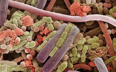 Успех ЭКО определяют… бактерии