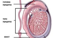 Эпидидимит острый и хронический: симптомы и лечение
