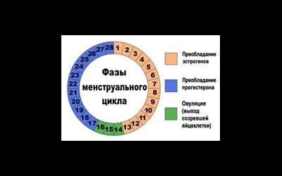 Как считать месячный цикл правильно