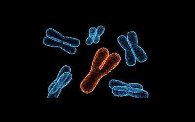 Потеря «мужской» хромосомы повышает риск злокачественных новообразований у мужчин