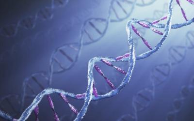 25 интересных фактов о ДНК