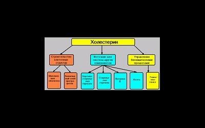 Высокий уровень холестерина отрицательно сказывается на зачатии