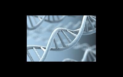 Найден ген шизофрении
