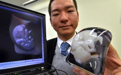 Искусственный яичник… напечатали на принтере