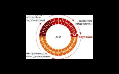 Продолжительность менструального цикла
