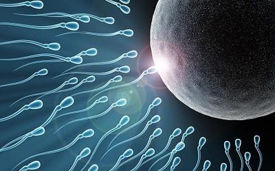 Отличие овогинеза от спермотогинезп