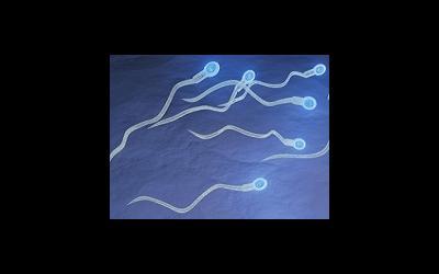Спермоизвержение приполовом акте