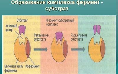 Ученые обнаружили фермент, вызывающий синдром Дауна