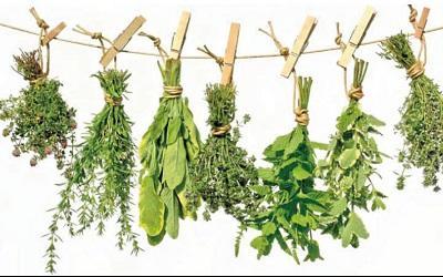 Содержание фитоэстрогенов в растениях и травах