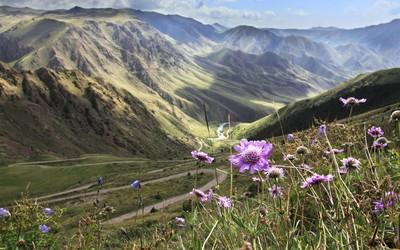 А как у них: в Кыргызстане утверждены новые правила для сурматеринства