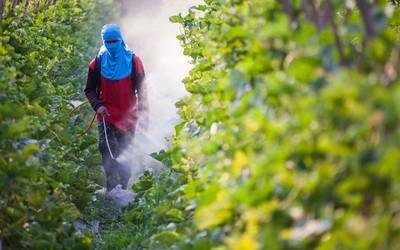 Пестициды наносят вред женской фертильности