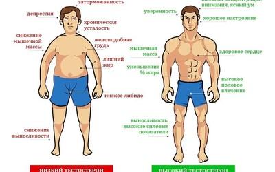 10 продуктов, снижающих тестостерон у мужчин