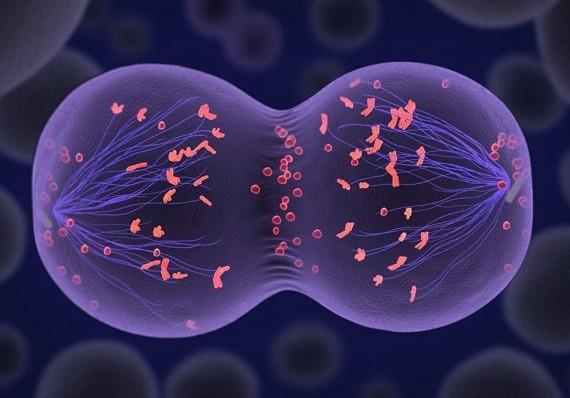 Найден белок, отвечающий за женскую фертильность