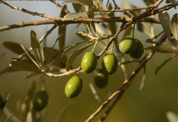 Средиземноморская диета повысит шансы на успех ЭКО