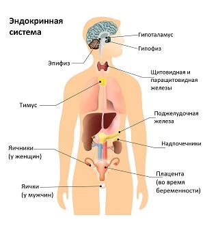 Гормональный фон – сбой, симптомы, лечение, Когда сдавать анализ крови на гормоны